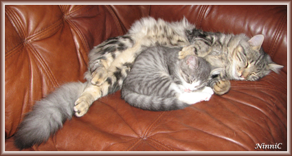 Snoozen och Pysen sover gärna tillsammans.