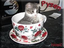 Pysen i den stora koppen som egentligen är en blomkruka.