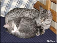 Kajsa och Pysen sover tillsammans.
