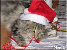 Julaftonens sötaste tomte - Snoozen.