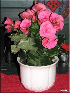 Tack-blomma.