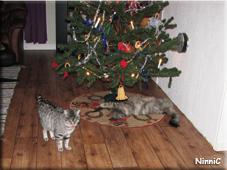 Kajsa och Snoozen gillar julgranen.