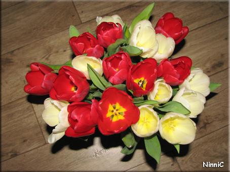 Röda och vita tulpaner.