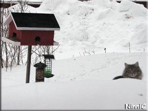 Snoozen väntar på att fåglarna ska vakna.