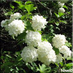 Buskens blommor.