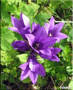 En blomma jag inte vet namnet på.