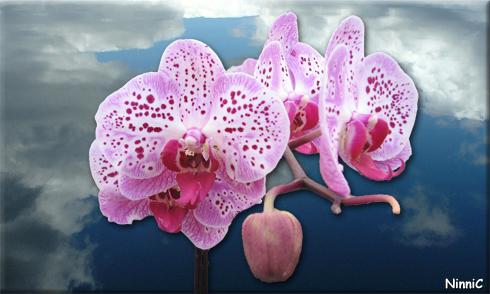 Orkidé mot molnig himmel.