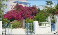 Santorini - Blomsterprakt i Kamari