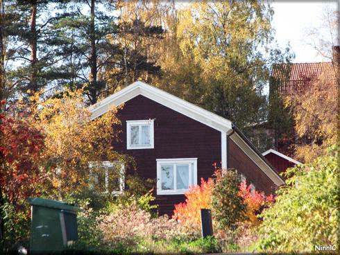 Färgsprakande höstfärger i Järvsö. 30 sept.