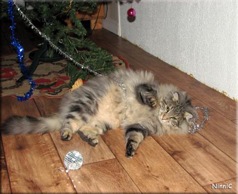Snoozen har julgransplundring - varje dag.