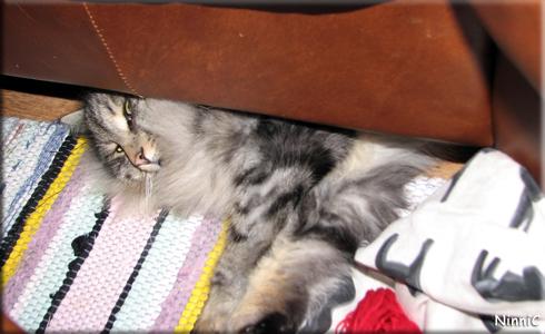 Snoozen under soffan.