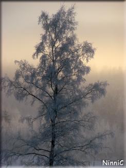 120109 Dis rimfrost och -12º.