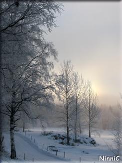 120109 Rimfrost och dis.