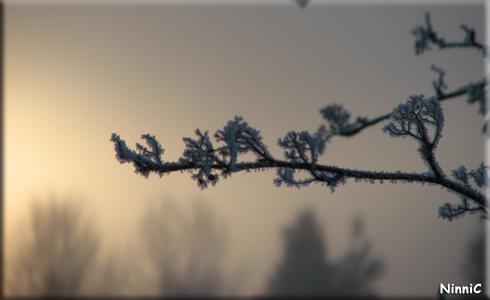 120109 Rimfrost.