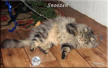 Snoozen.