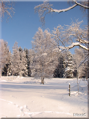 120203 Härliga vinter.