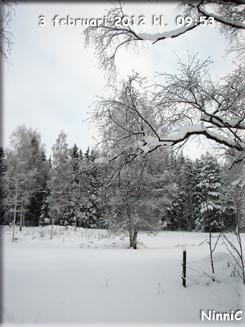 120203 Vinterträd.