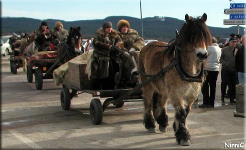 120323 En fin, lurvig och lockig häst som nu snart ska få vila.