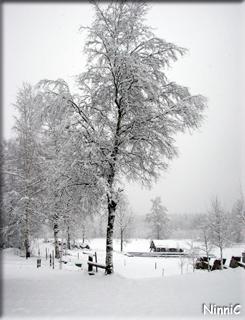 120421 Plötsligt var det vinter igen.
