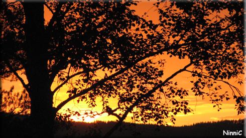 120802 Sprakande färger i solnedgången.