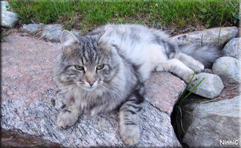 120628 Snoozen är kamouflerad och smälter in i stenarna.