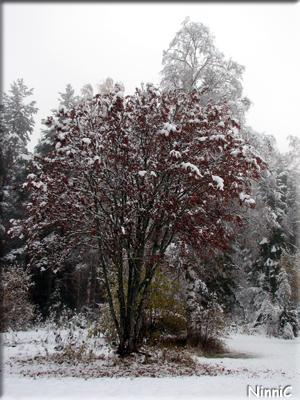 121014 Vackert med snö på träden.