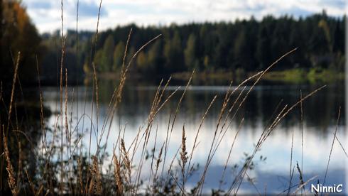 120928 Strån vid Henriksfors.