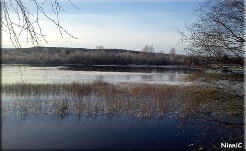 121109 Vid Ljusnans strand.