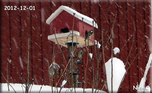 Inte så lätt att vara en liten fågel när det kommer så mycket snö.