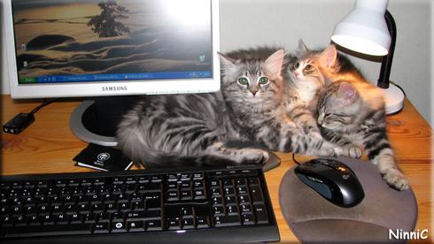 100127 Maffe Mumlan och Snoozen trängs vid datorn.