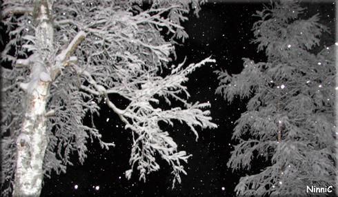 130116 Snöiga träd.