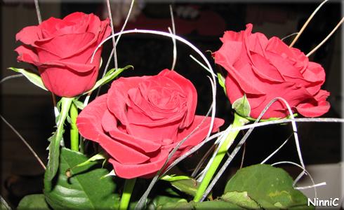 130219 Alla Hjärtans Dag rosor