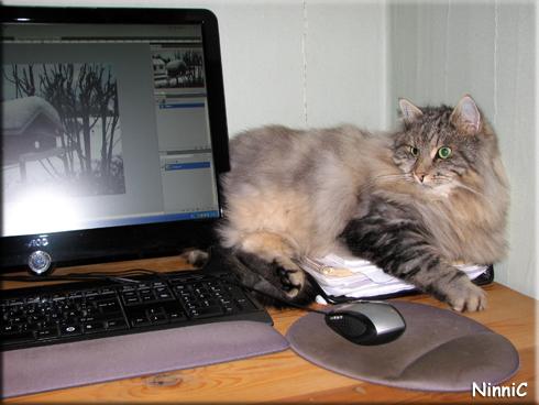 Snoozen vill vara med vid datorn.