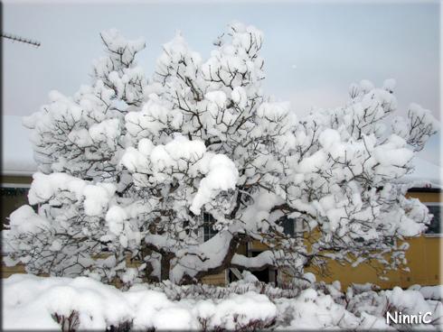 Träd hos grannen K.