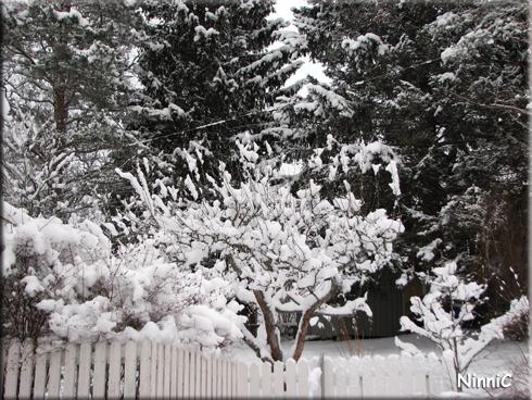 Vår snöiga baksida.