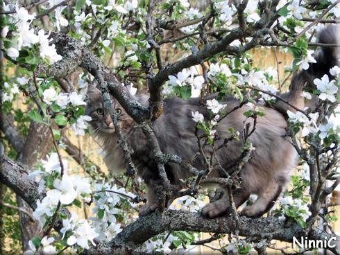 140523 Snoozen i sitt klätterträd