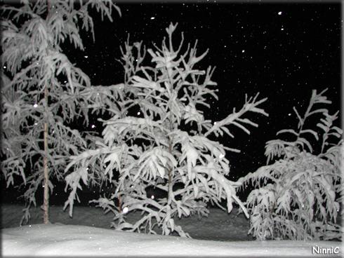 130116 Snöiga träd
