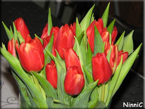 151212 Blommor från mor och far