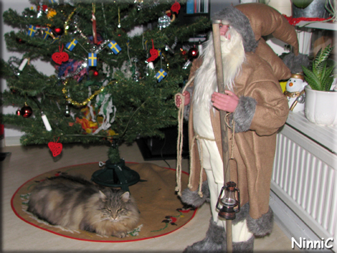 151226 Snoozen njuter av julen och sitt egna inomhusträd.