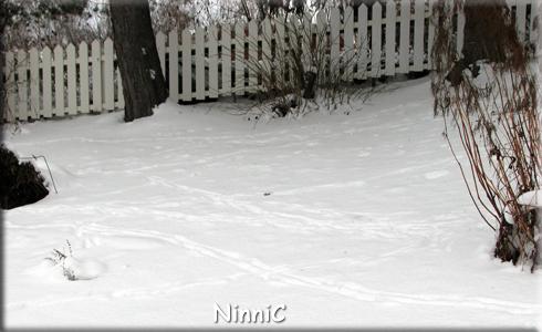 160123 Många spår i snön