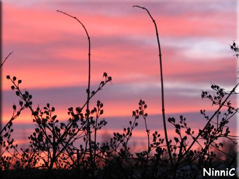 160204 Himmel i rosa och blått