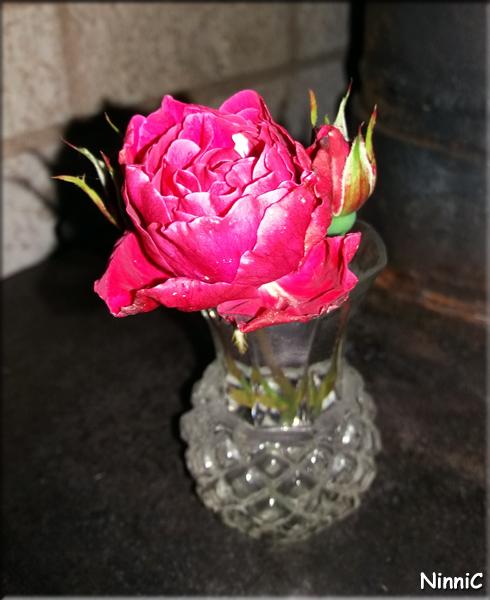 170929 Höstens sista ros