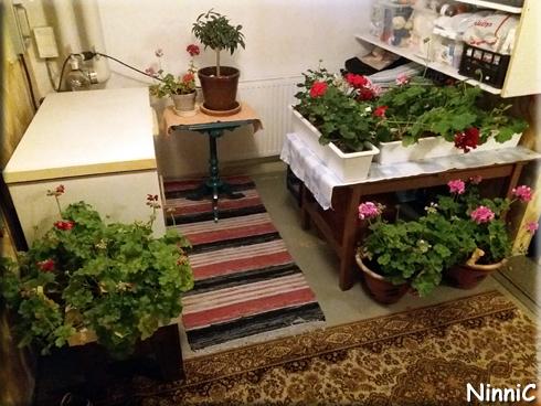 171008 Blommande källare