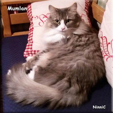 Mumlan
