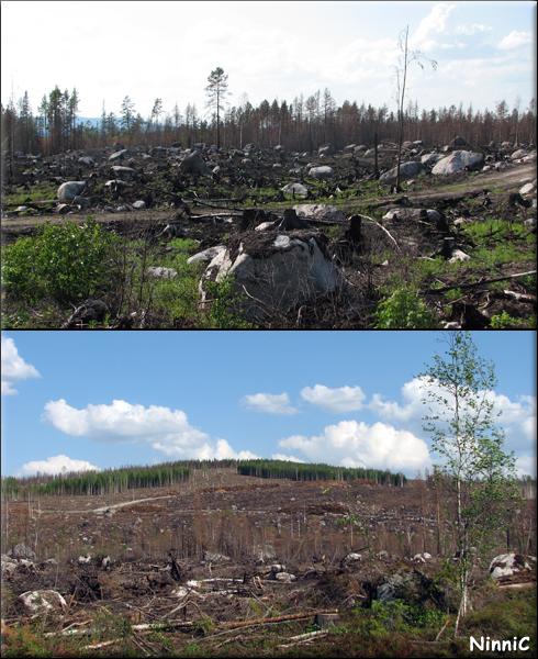 Bränd skog i Kårböle
