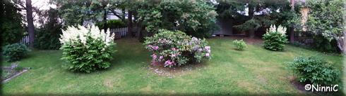 210621 En del av min trädgård