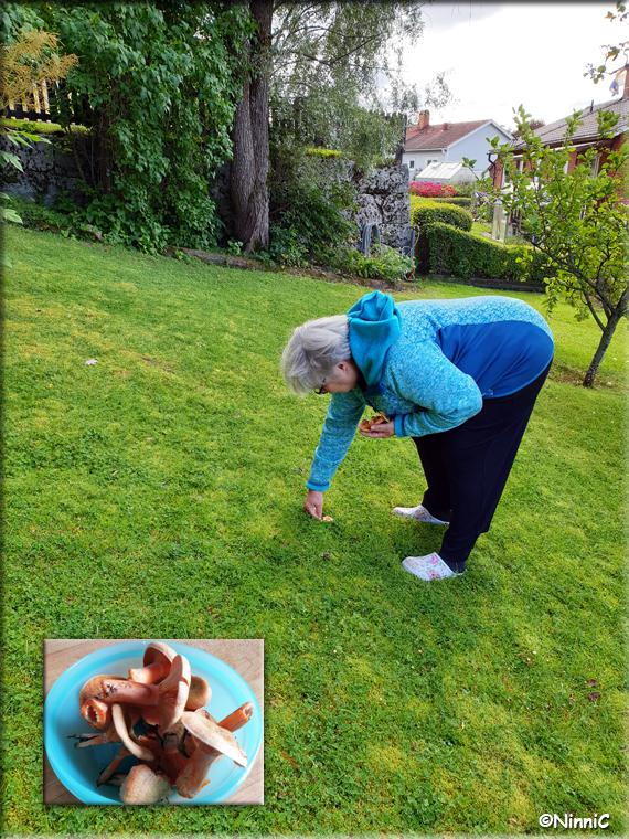 210821 Paula hittar Blodriska i min trädgård.